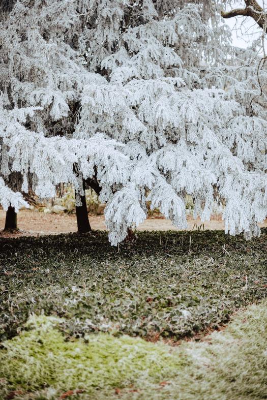 frozen trees chateau challain