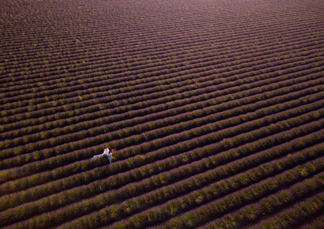 drone prewedding lavender provence
