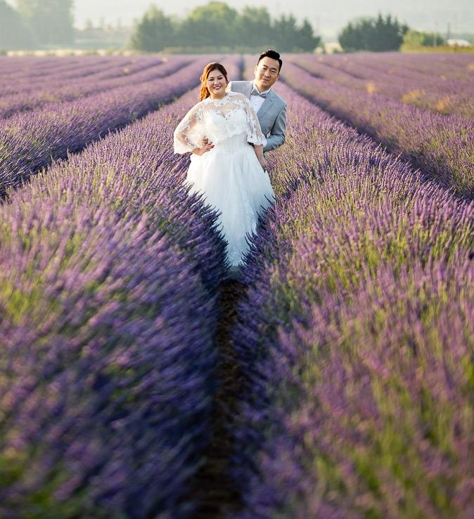 lavender field provence couple portrait