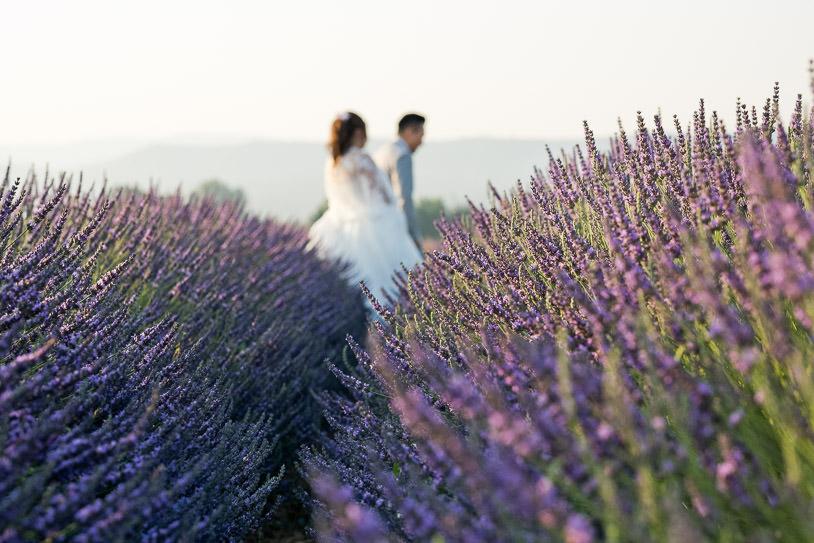 lavender field provence portrait